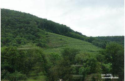 ALSACE: route des vins