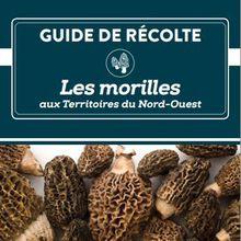 """Morilles 2015 - Le """"secret des morilles de feu"""" au Canada."""