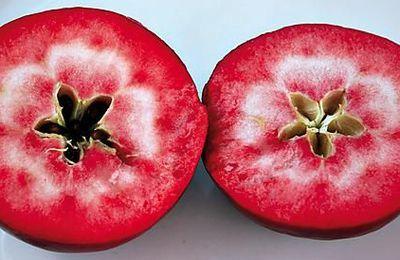 Les pommes à chair rouge : un régal... pour les yeux et les papilles !