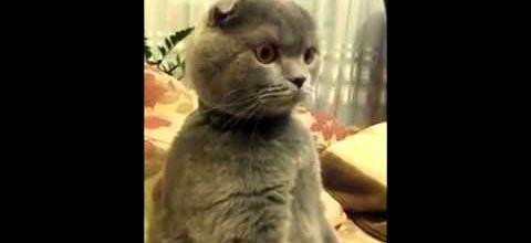 Le chat qui regardait Star Wars