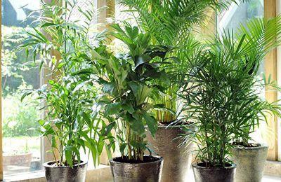 Misterbricolo prend soin de ses plantes d'intérieur ...