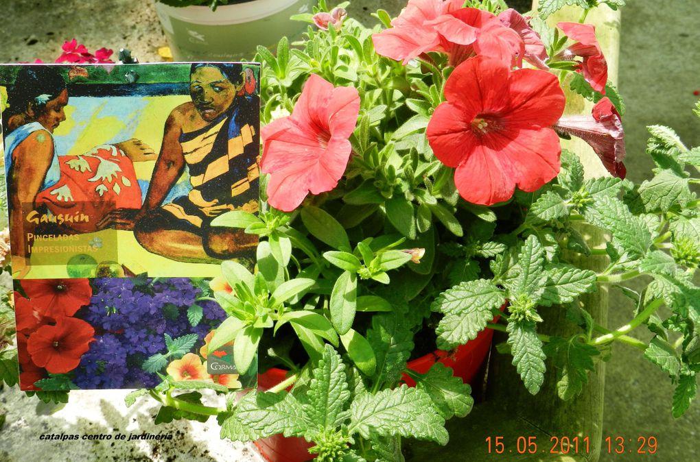 Plantas para jardín y flor cortada para jarrones.