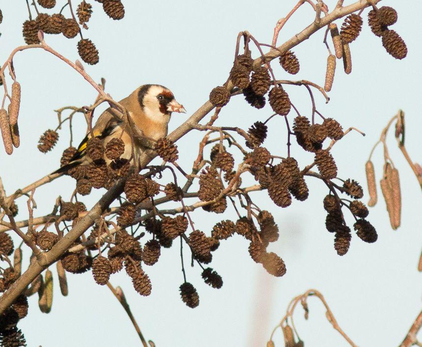 Abeilles, oiseaux, crapauds, habitats, autant d'arguments pour donner un statut de protection aux parcelles.