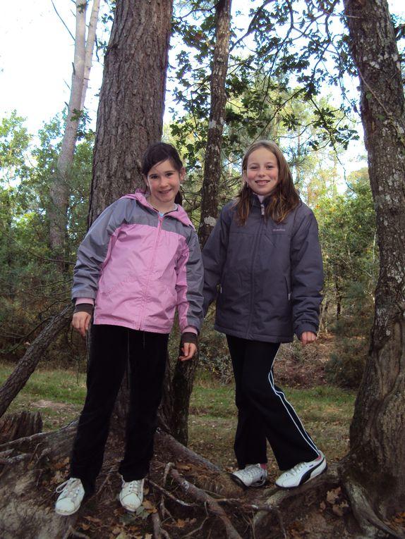 Suite du voyage en forêt de Brocéliande.