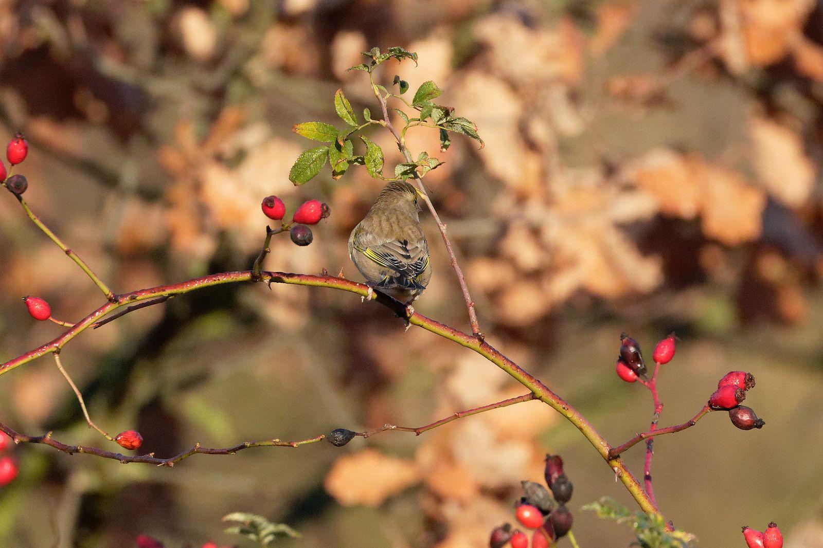 538 - La Pollinisation porte bien ses Fruits  : 28/11/2020