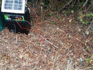 Electrificateur pour clôture chevaux