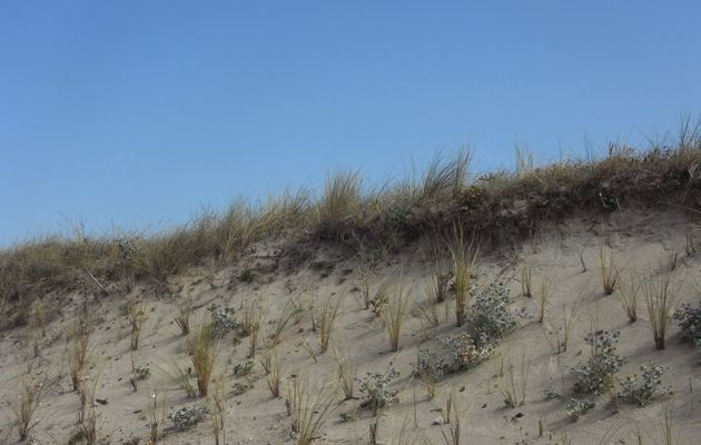 Pen Bron, ses dunes, ses pins...