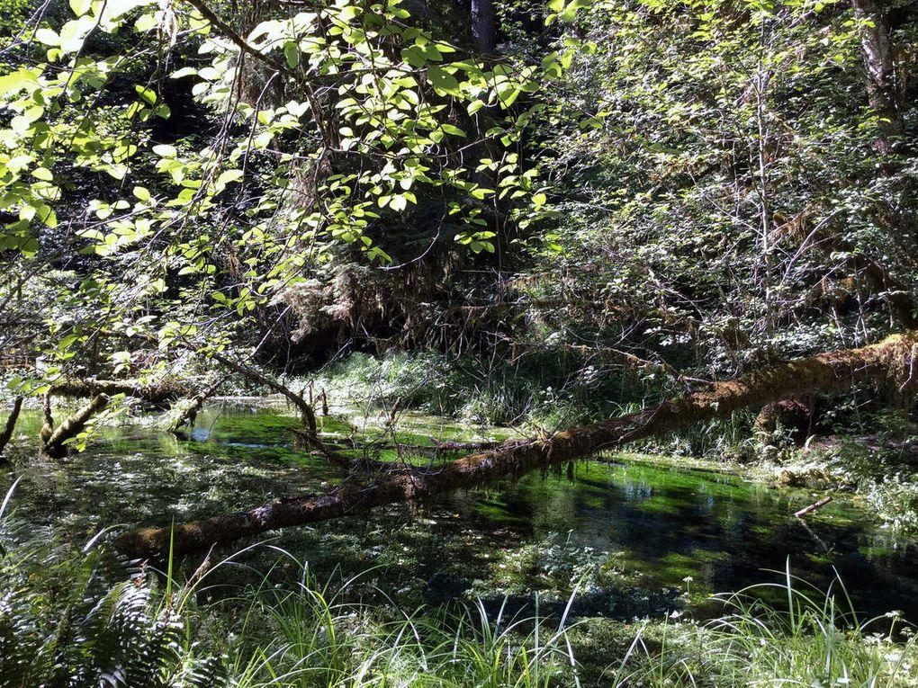 Diaporama Hoh Rainforest Hall of Mosses trail