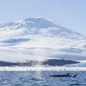 La calotte glaciaire de l'Antarctique occidental abrite une centaine de volcans - MOINS de BIENS PLUS de LIENS