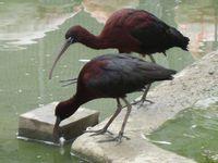 Quelques oiseaux du zoo