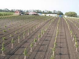 Viticulture in South Dakota