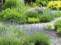 Au Moyen-Âge le jardin des simples était un jardin d'aromatiques a fonction médicinale.