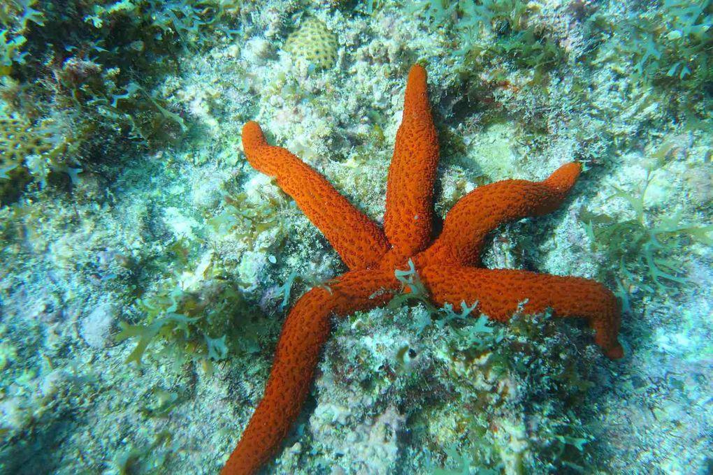 Photos sous-marines Taosailing.com
