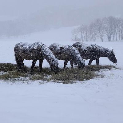 Il neige sur le Jura, le Pays Blanc ...