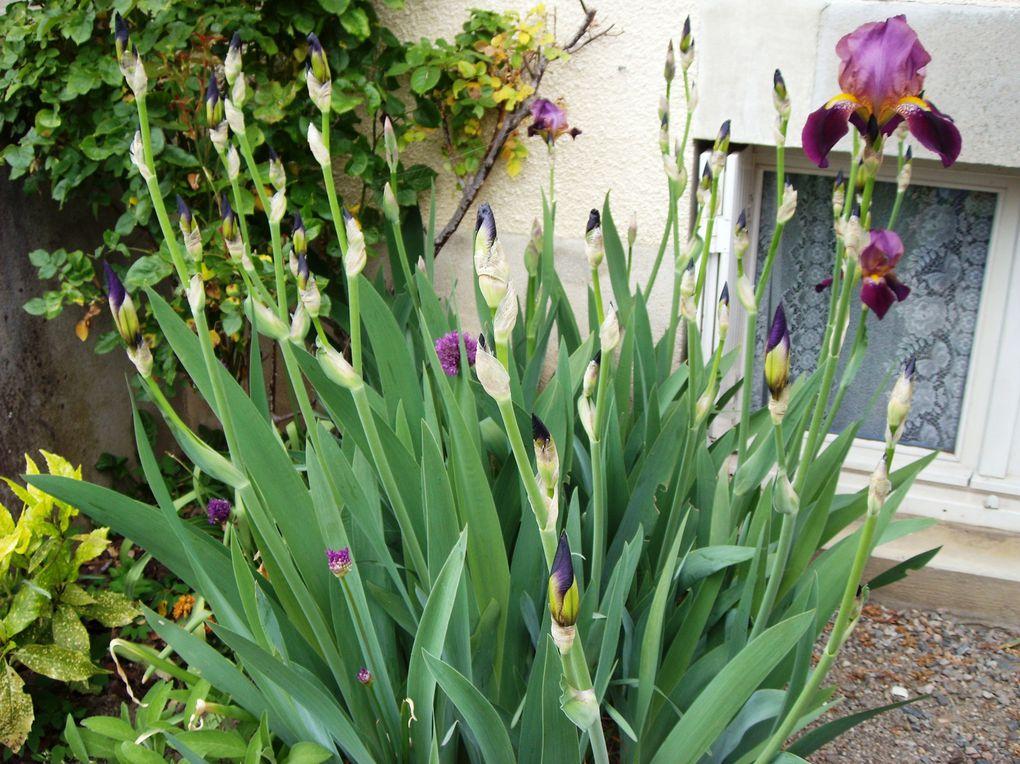 Album - Fleurs-du-jardin