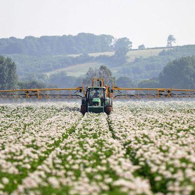 Pesticides: contrôle sanitaire très insuffisant