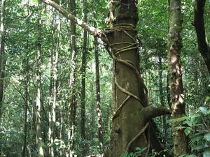 Dans la région de Cairns