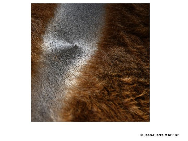 Le pelage des animaux nous réserve bien des surprises avec ses motifs qui peuvent être proches de l'art abstrait.