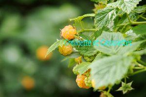 Tour au Jardin de juin : le début des récoltes