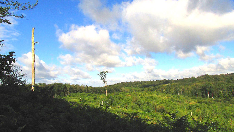 les Monts de la forêt de Laigue