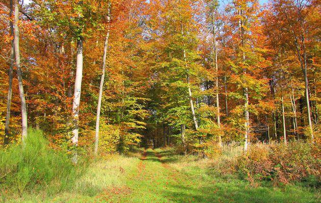 carrefour_Route des Brigands_Route du Bois des Moines