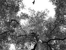 L'oiseau_19