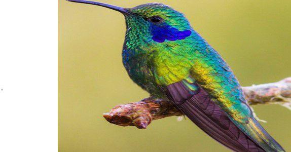Comment devenir un colibri de la nutrition ou concilier nutrition et environnement ?