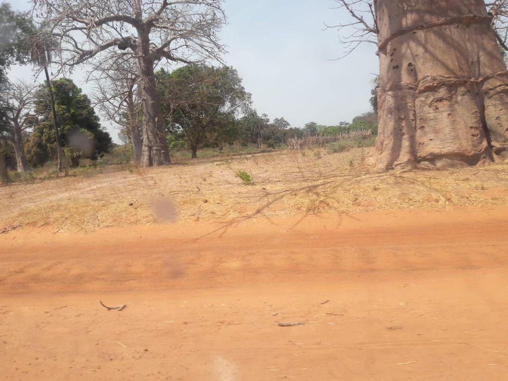 La piste qui mène à Sindian, les photos le long de la piste, les manguiers, les villages, etc