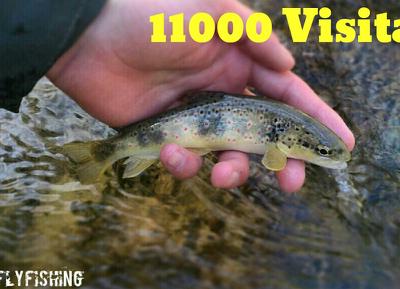 Superadas las 11000 VISITAS!