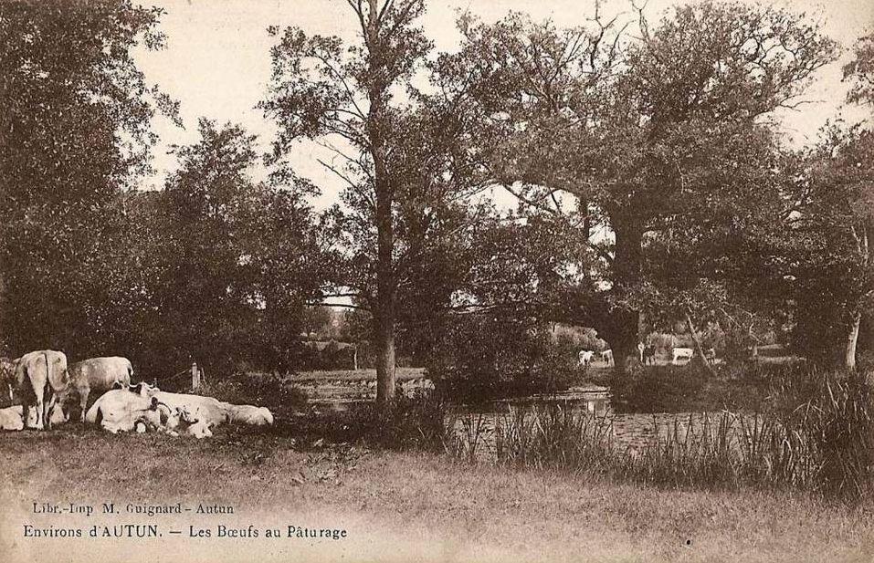Attelage,Foire, habitat,labours