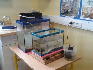 35 espèces marines prélevées la veille et mises en aquarium ; puis présentées dans un bac pour l'observation. Pas d'inquiétude! Les animaux choisis supportent d'être à l'air libre dans un fond d'eau de mer comme à marée basse.