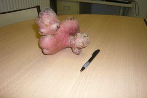 Appel aux légumes originaux