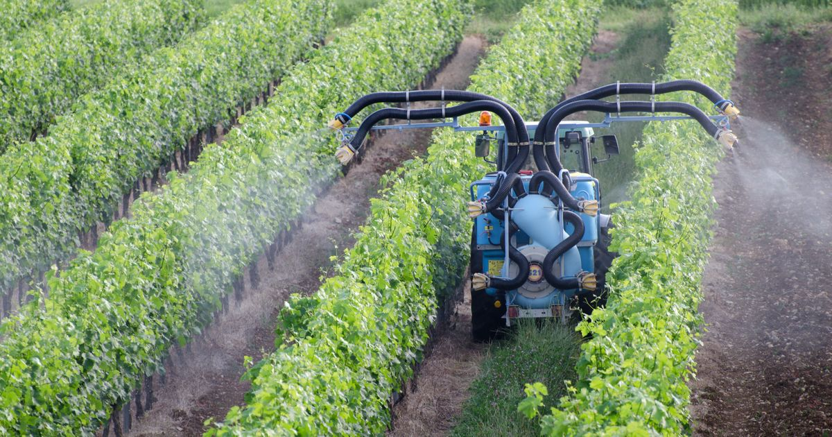Les pesticides explosent en France