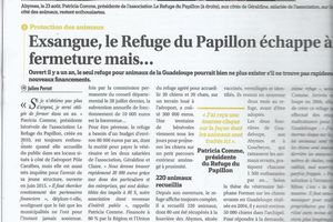 MERCI au COURRIER de GUADELOUPE pour son article
