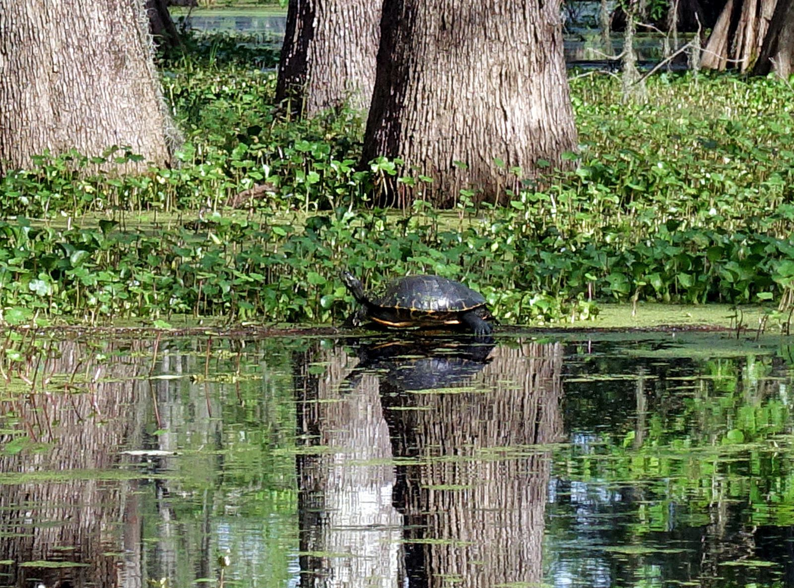 Lake St Martin tortue