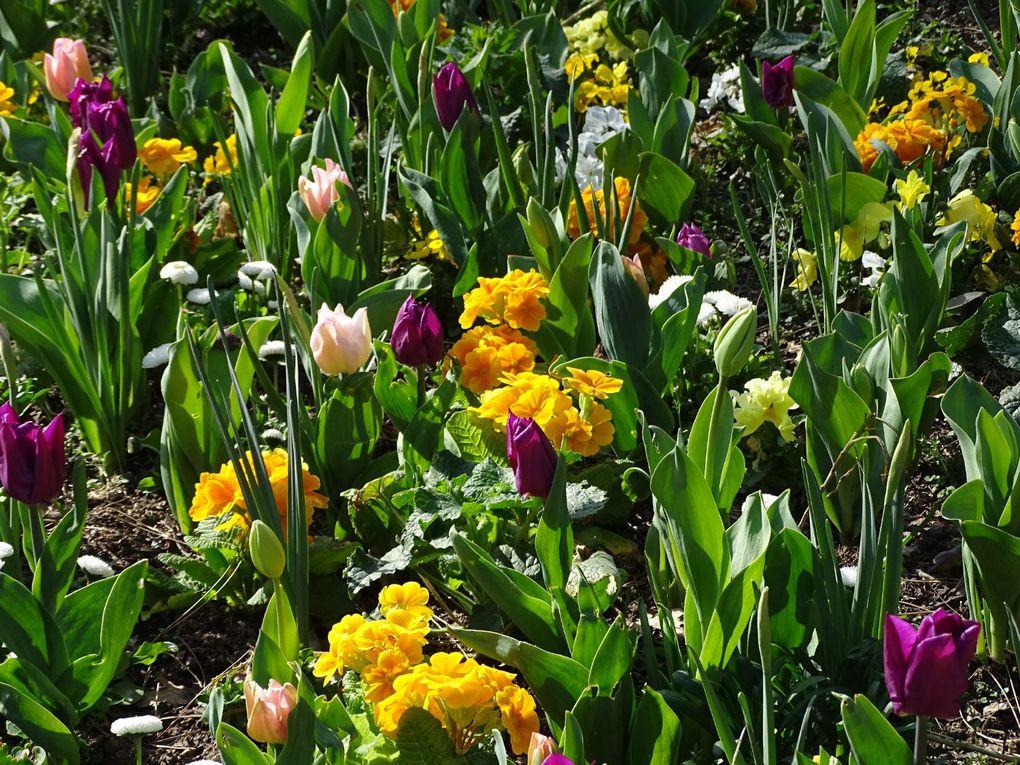 Le Parc Floral de Vincennes se réveille...