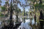 MAI 2019 : Jour 4 suite/ Lake Martin Swamp Tour
