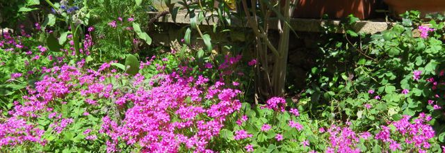 Mon jardin au mois de juin / Balade en Provence