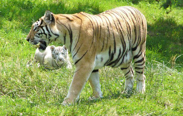 """Documentaire inédit - """"100 jours avec les animaux de Cerza, le plus grand zoo de Normandie"""" vendredi prochain à 21h15 sur C8"""