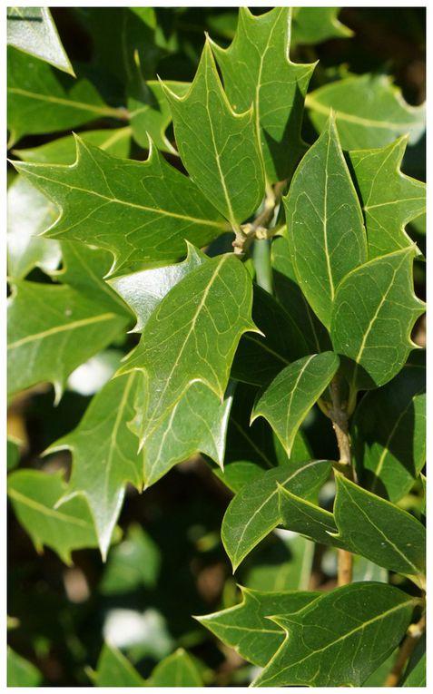 Les feuilles et ses formes