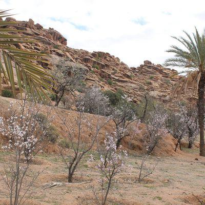 Abeinou -Oasis de tighmert -Tafraout