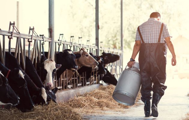 COVID-19 Impact Analysis for Dairy & Beverages Market 2020