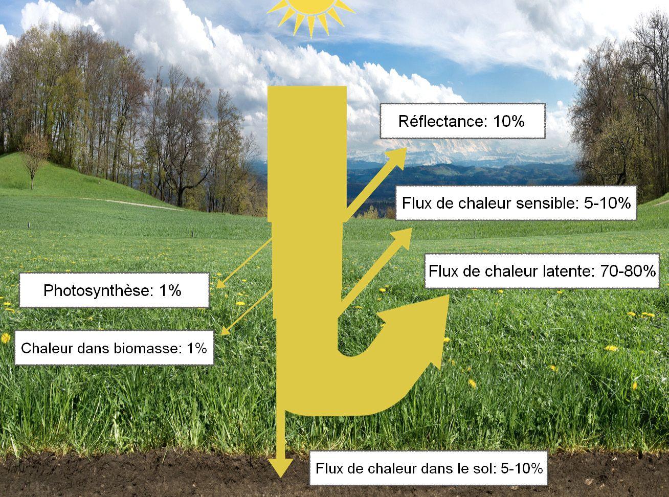 Travailler avec les plantes, les sols et l'eau pour rafraîchir le climat et réhydrater les paysages de la Terre