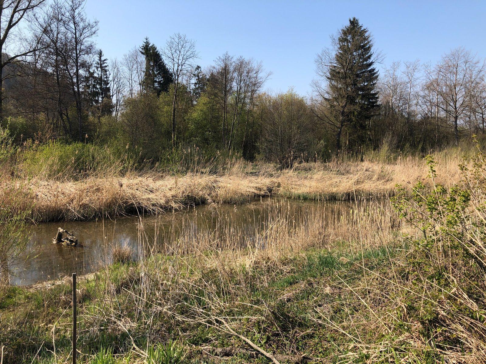 Mardi 20 Avril : La vieille Aar de Büren à Aarberg