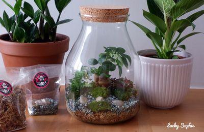 Fabriquer son terrarium avec le kit Boby la plante 💚