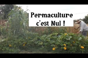 La Permaculture c'est NUL ! (Je réponds aux critiques)