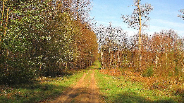 le GR655 dans les Forêts de Compiègne et de Laigue