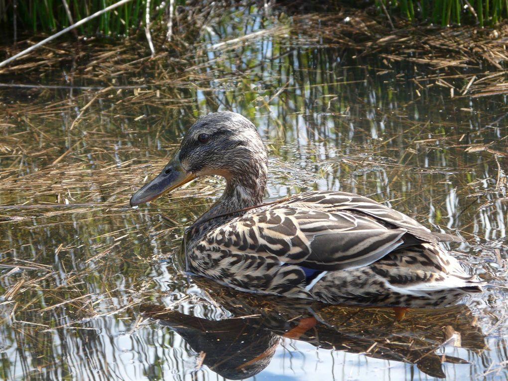 quelques habitants du parc ornithologique du Teich, sur le bassin d'Arcachon