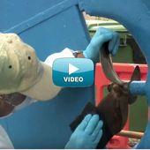 VIDEO Experts Uship Académie - entretenir l'hélice de son bateau avec Peller Clean de SeaJet - ActuNautique.com