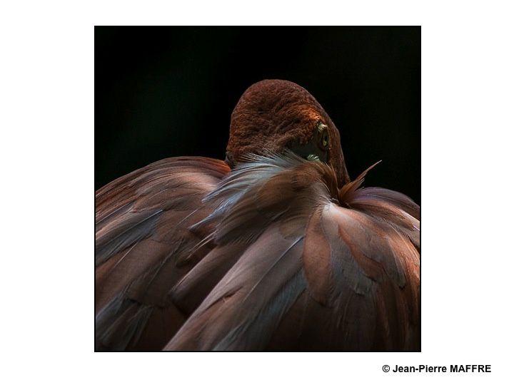 Quand la lumière joue avec le plumage des flamants roses.